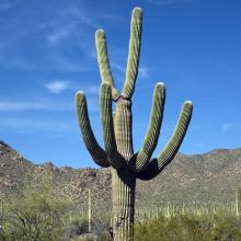 A large cactus with a terrain of desert rocks and plants.